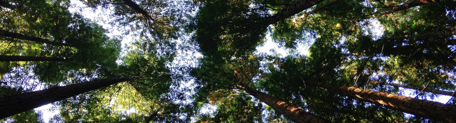 environmental_speakers_photo_of treetops_by_Angela_Benito