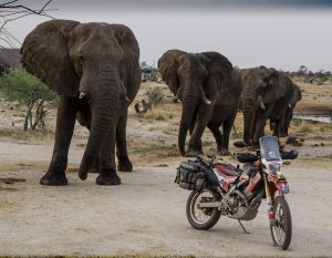 Steph Jeavons and elephants